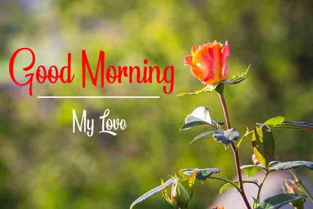 Free HD good morning Images 3
