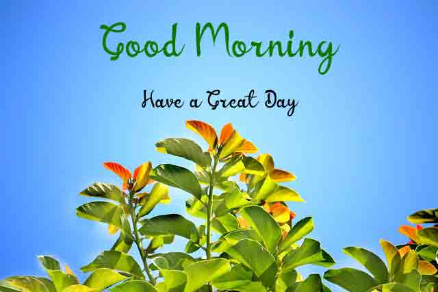 Free Latest HD Love Good Morning Images