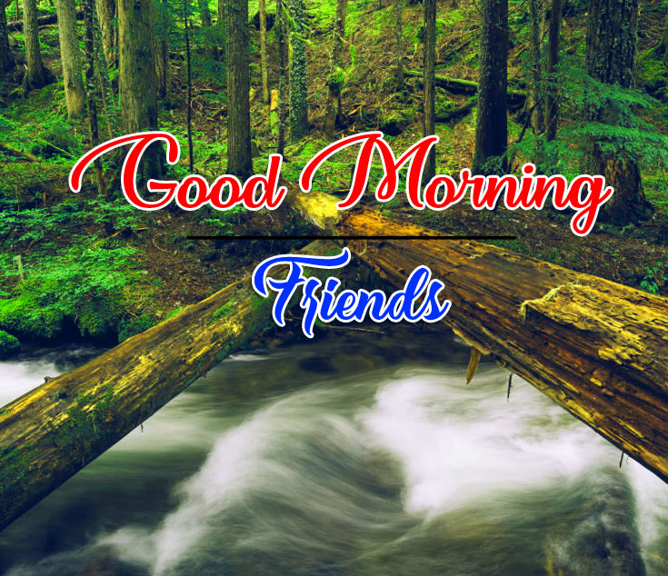 Free Nature good morning Whatsapp dp Images