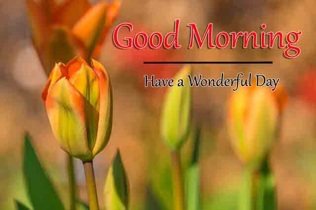 Free New Good Morning All Images Download