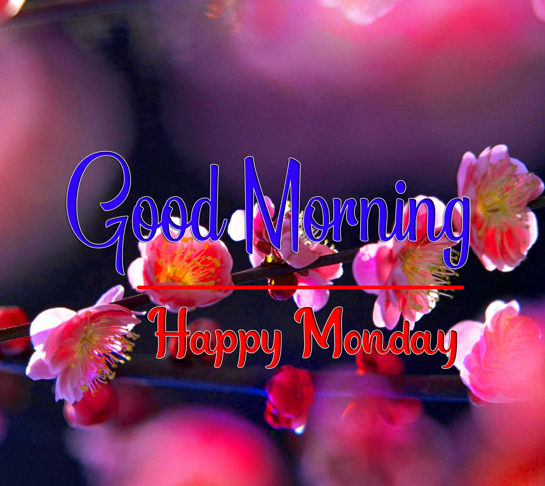 Free New HD Monday Good Morning Images 1