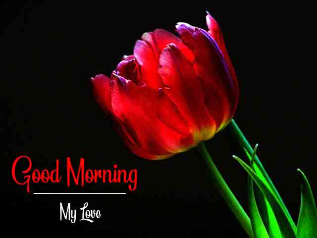 Free Rose Good Morning All Images