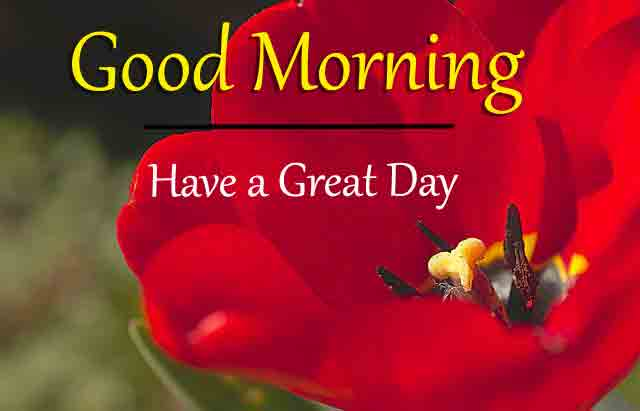Free Top HD Good Morning All Images