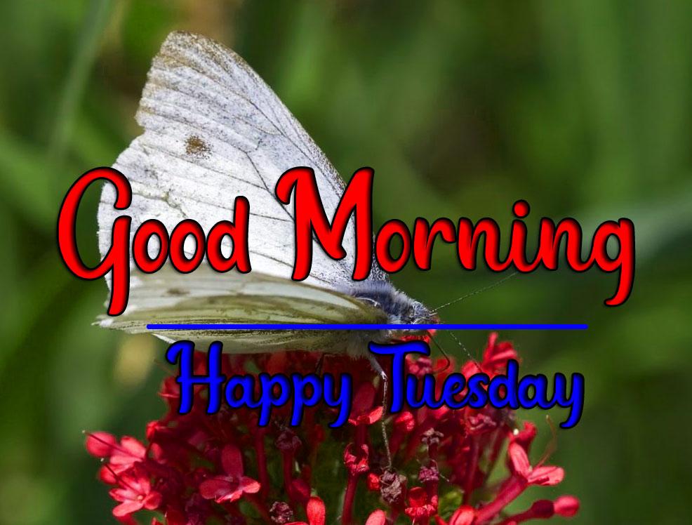 Fresh Beautiful Tuesday Good morning Images 2021