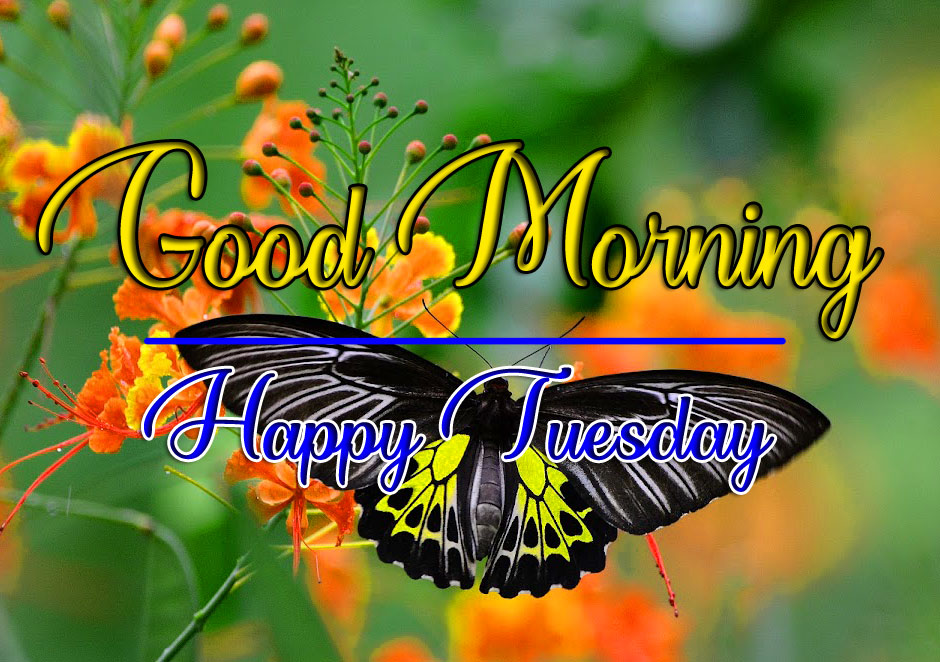 Fresh Beautiful Tuesday Good morning Images With Butterfly