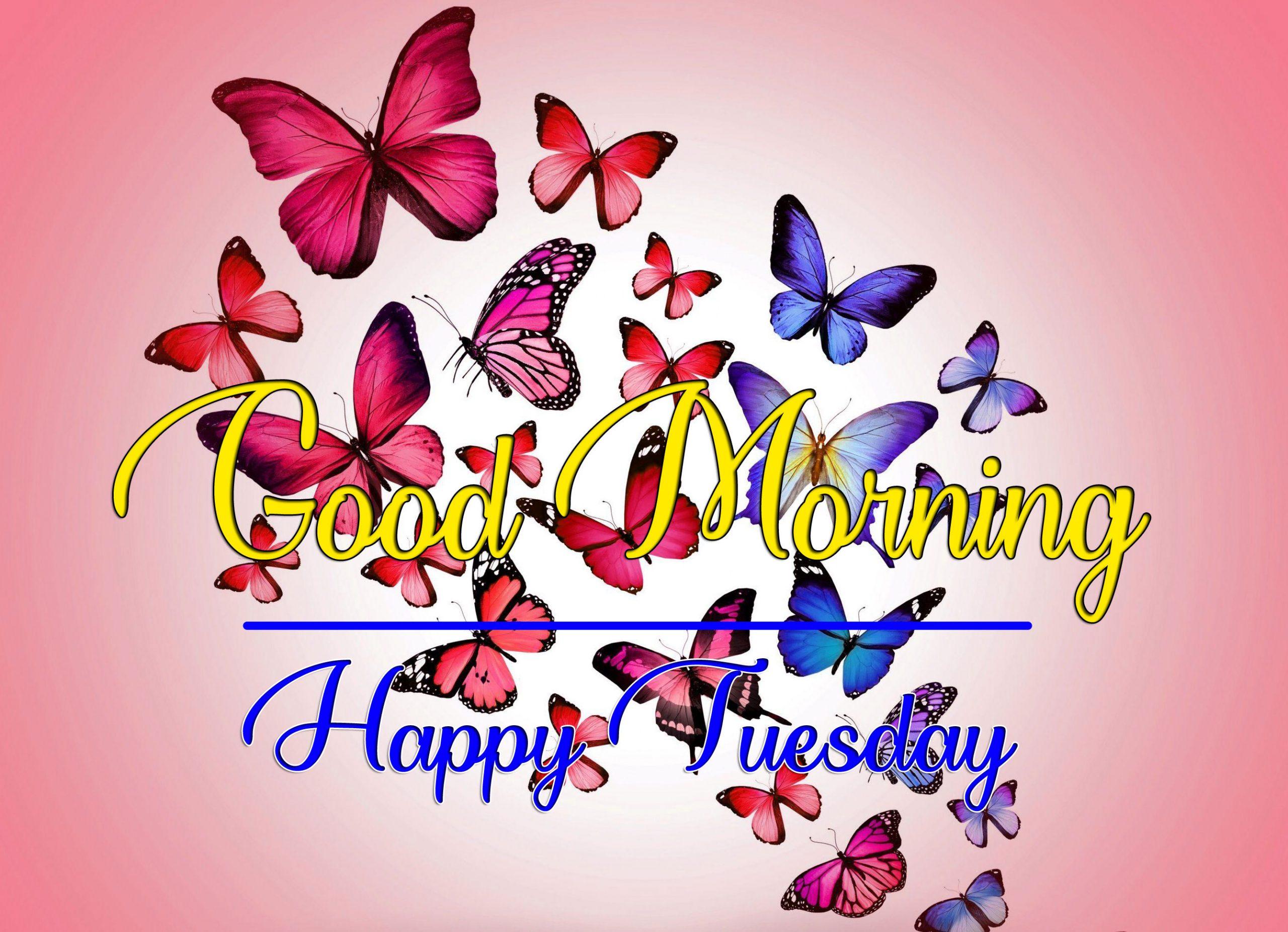Fresh Beautiful Tuesday Good morning Images