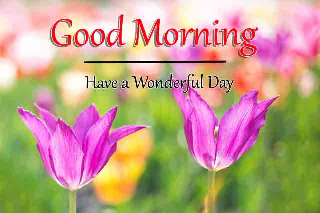 Fresh Good Morning All Images 3