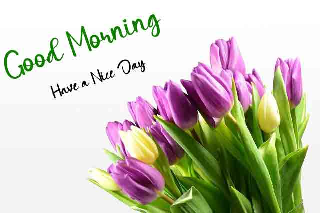 Fresh Good Morning All Images