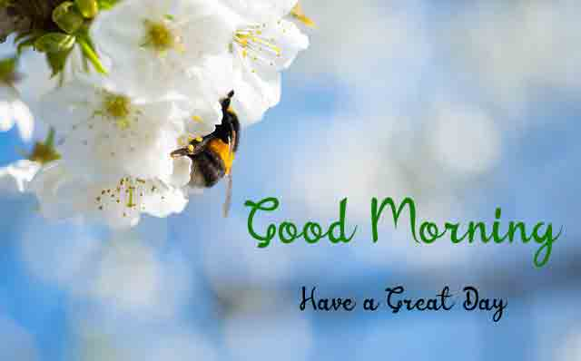 Fresh Good Morning Dear Images for Friend