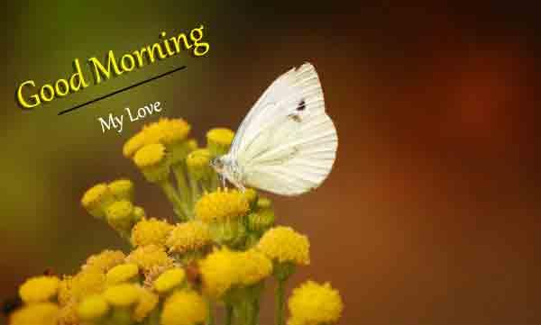 Fresh Love Good Morning Images 2021