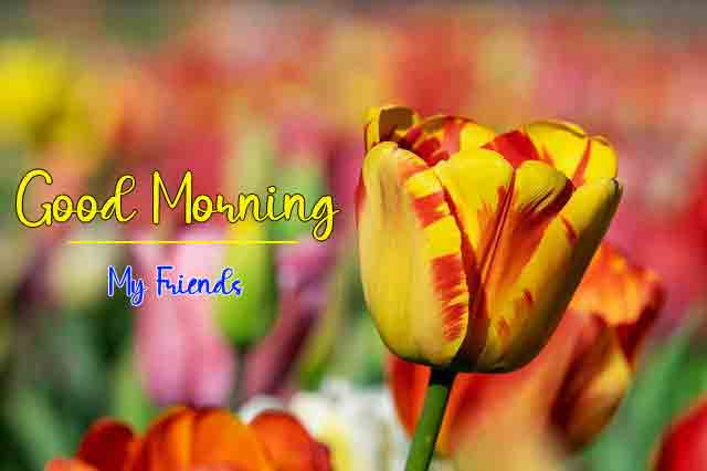 Fresh Quality Good Morning All Images
