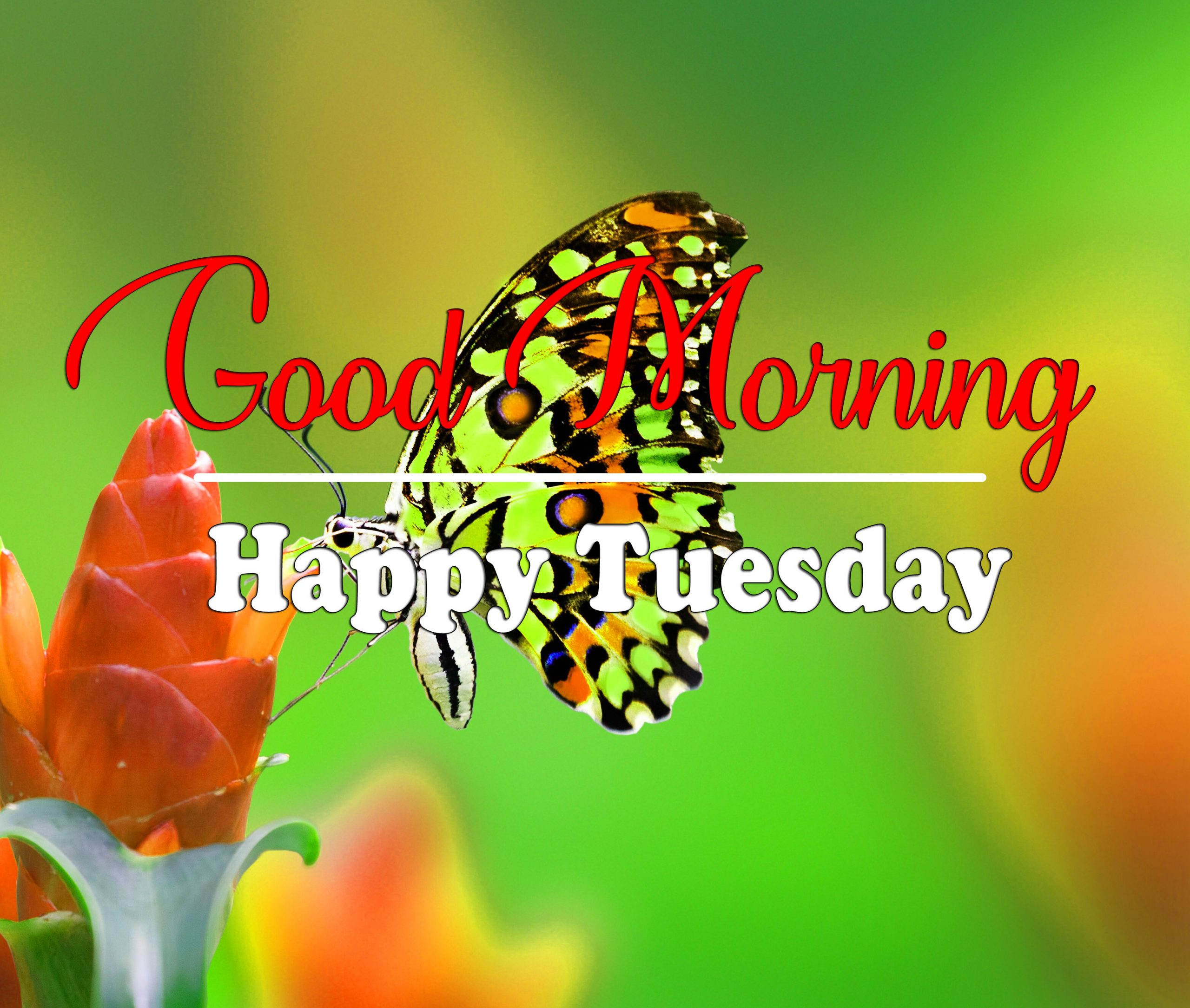 Fresh Tuesday Good morning Images 2021