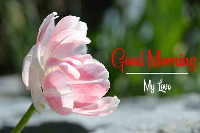 Good Morning All Images With Flower