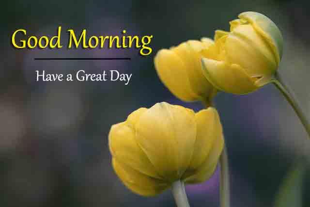 Good Morning All Pics Download