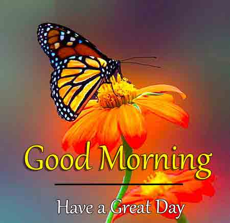 Good Morning Dear Images New
