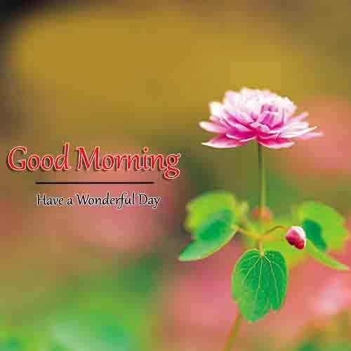 Good Morning Dear Pics Free Download
