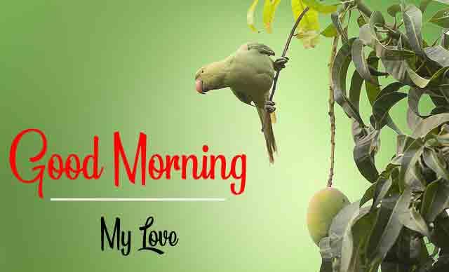 Good Morning Dear Pics HD For Bird