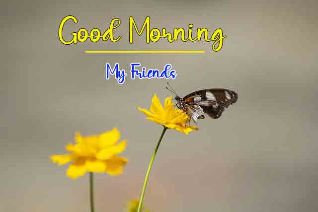 Good Morning Dear Pics Pictures With Butterfly