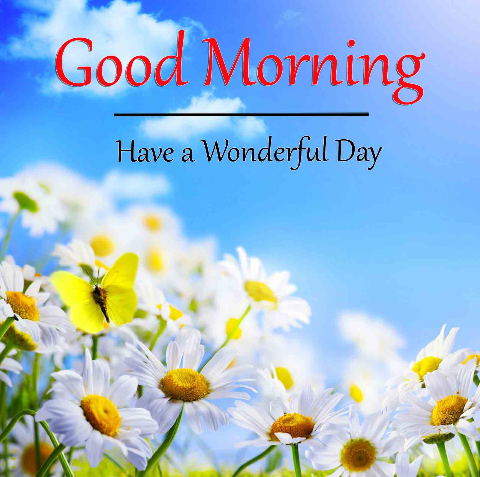 Good Morning Dear Pics Pictures