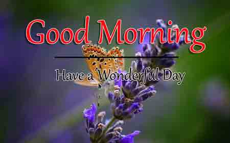 Good Morning Dear Pics With Butterfly