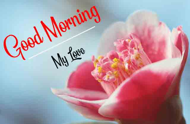 Good Morning Dear Pics With Flower