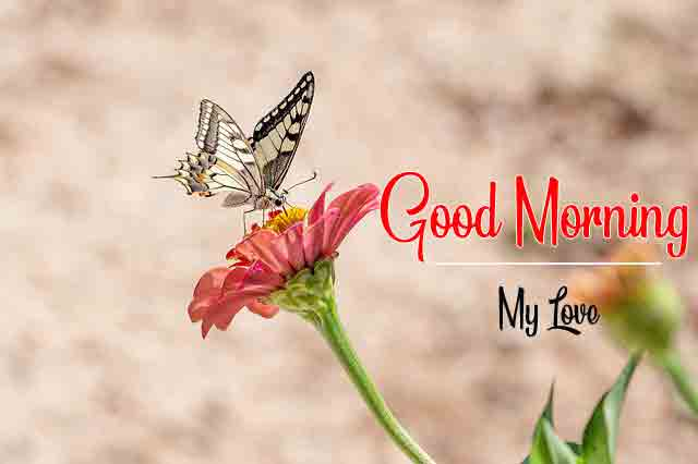 Good Morning Dear Pictures 2021