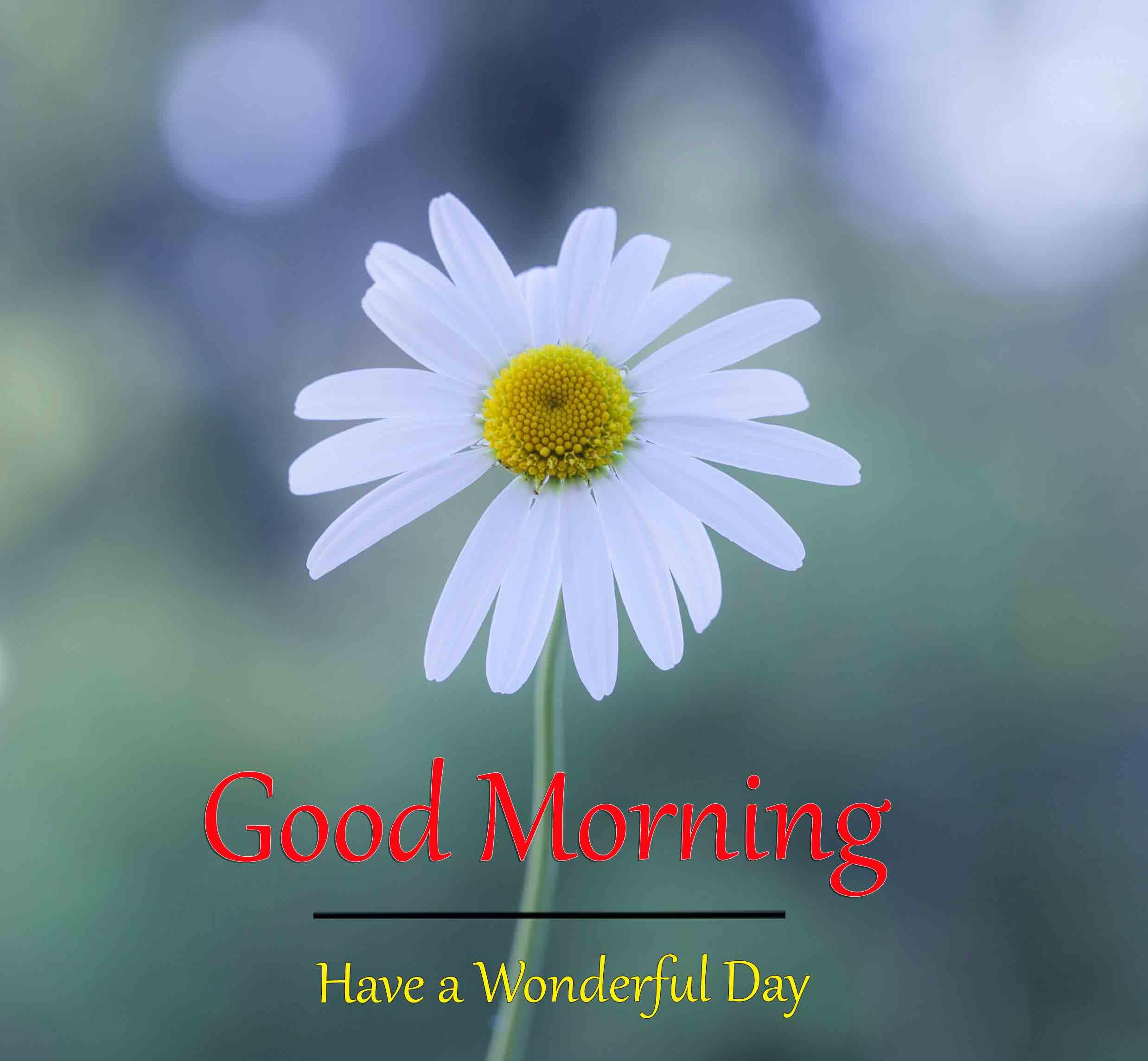 Good Morning Dear Wallpaper