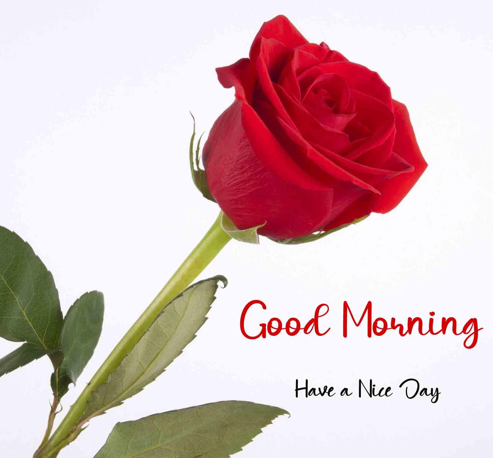 Good Morning DearP Photo