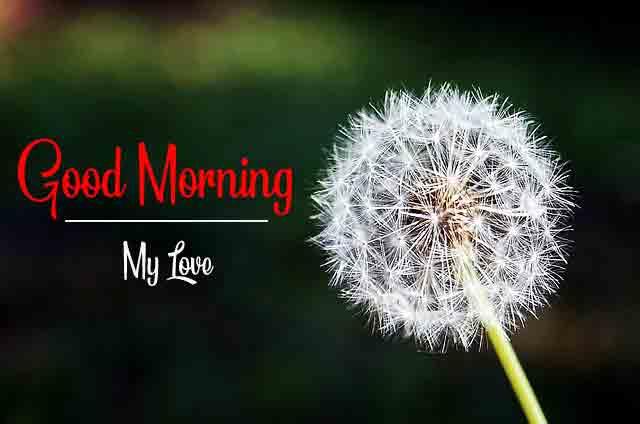 Good Morning Pics New 1