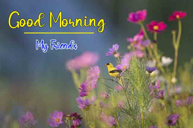 Good Morning Pics Pictures 2021