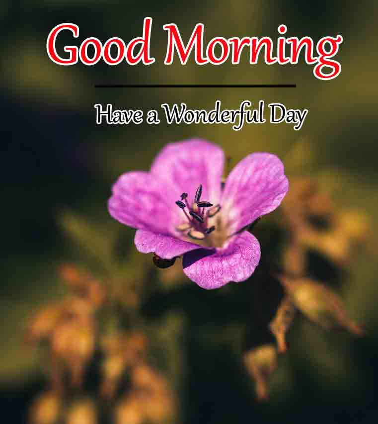 Good Morning Pics Picturres