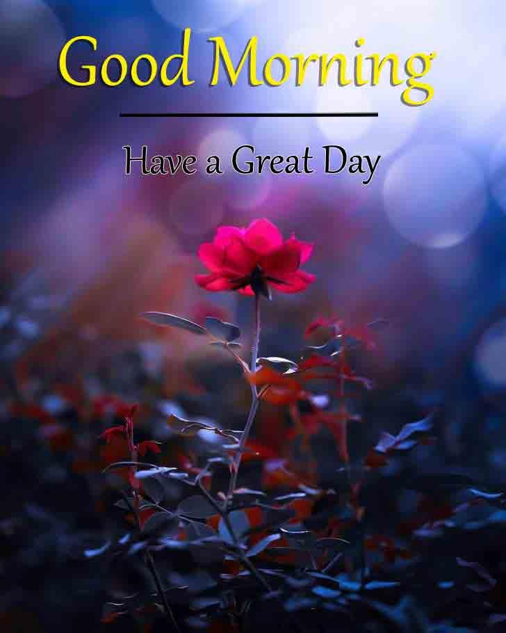 Good Morning Wallpaper 2021 1