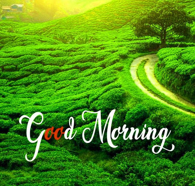 Good Morning nature 5 1