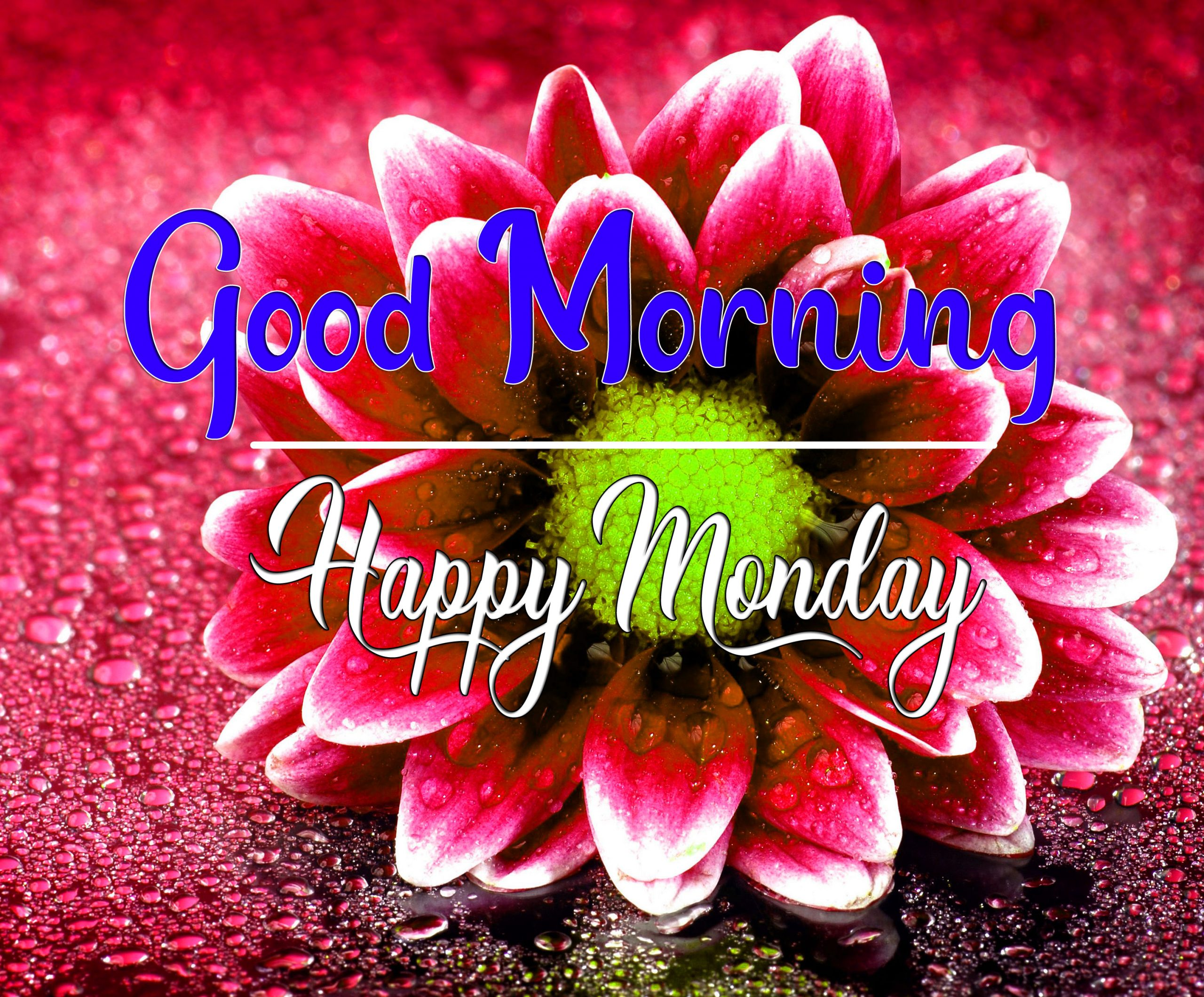HD Best Monday Good Morning Images 1