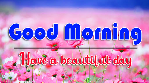 HD Flower Good Morning Wishes Images