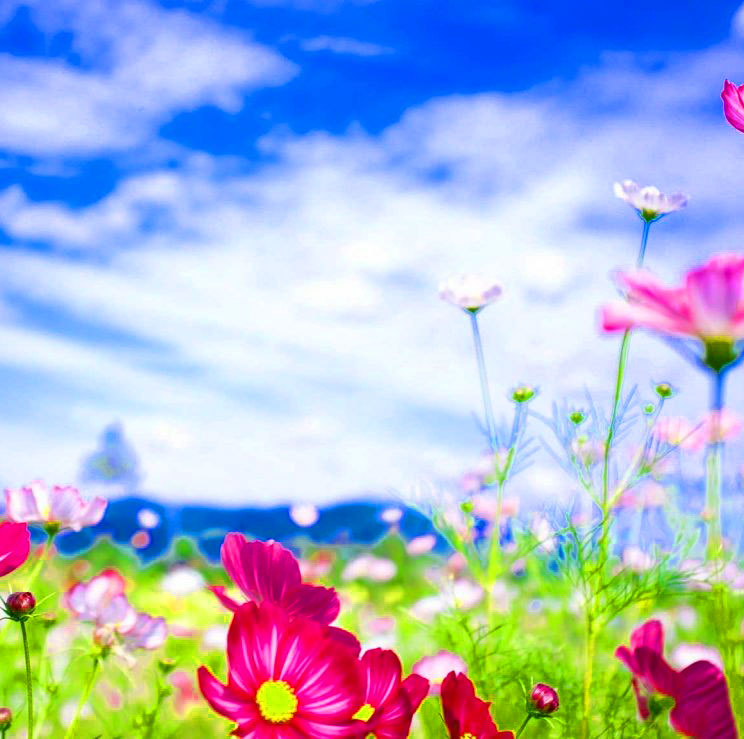 HD Free Nature Latest DP Images 1