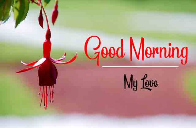 HD Quality Good Morning Dear Images