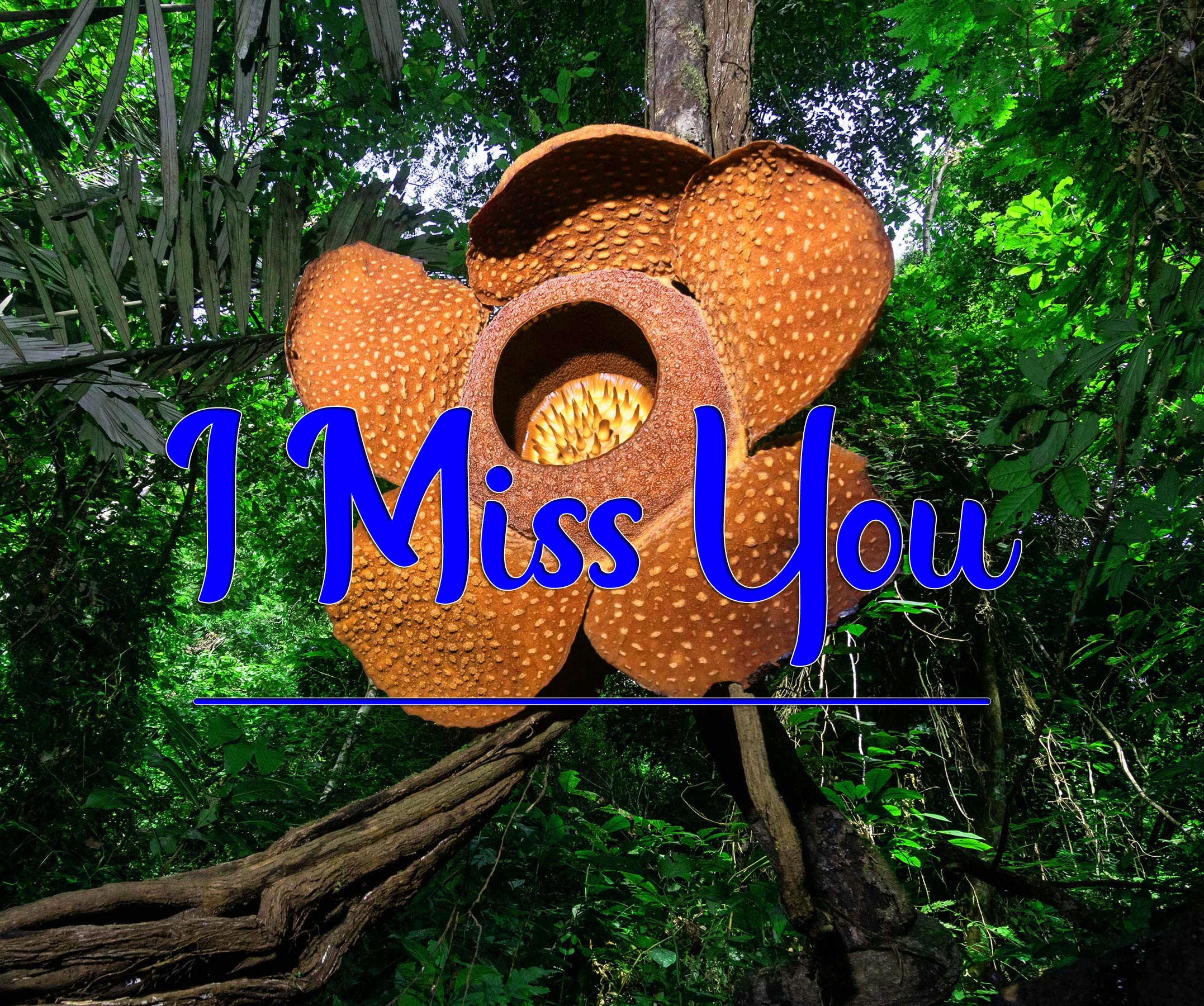 HD Sad I miss you Pics