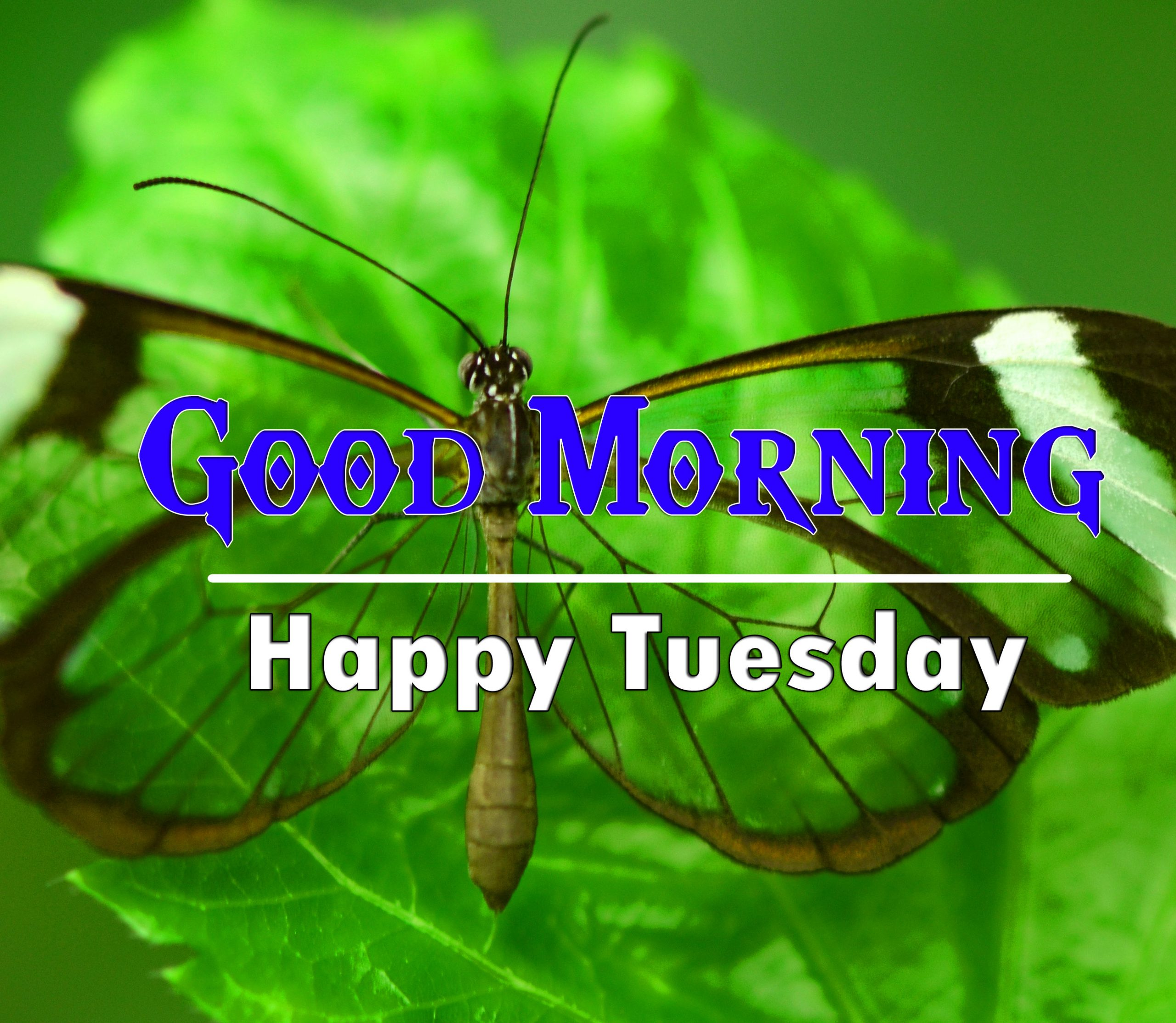 HD Top Quality Tuesday Good morning Images Free