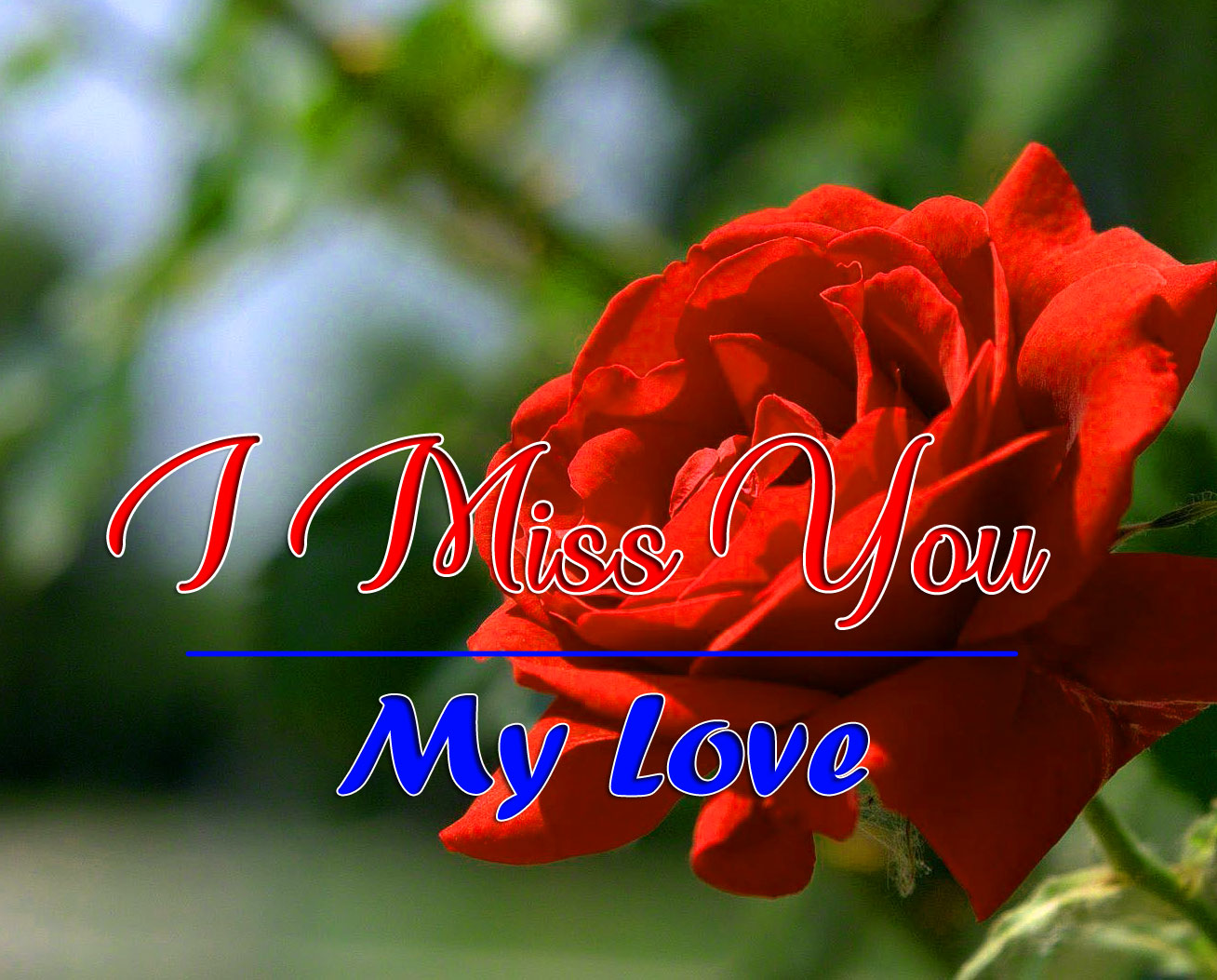 I miss you Wallpaper With Red Rose