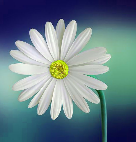 Latest DP Pics Wallpaper With Flower 1