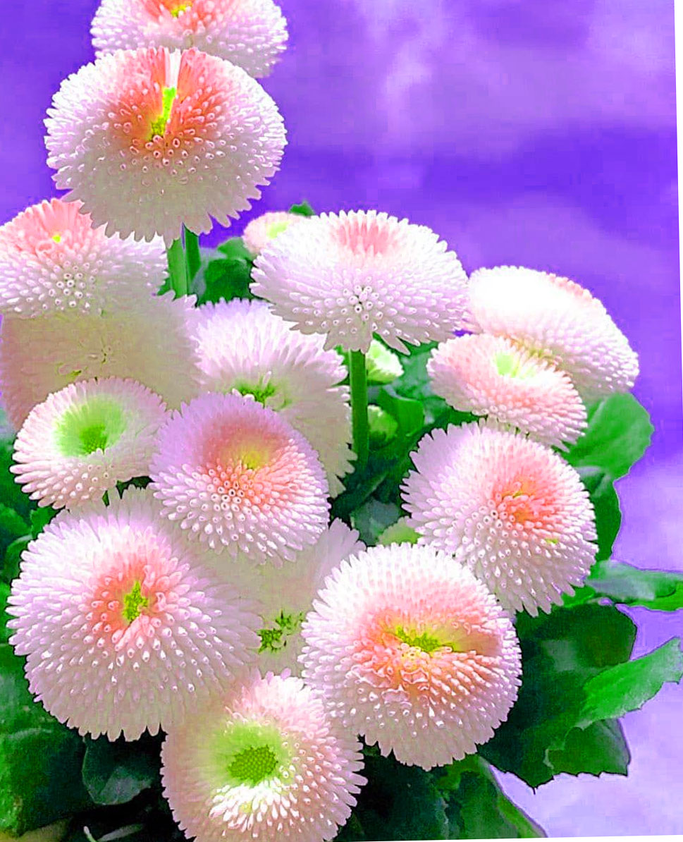 Latest HD Beautiful Flower Images for Whatsapp DP Images