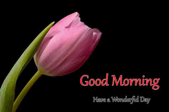 Latest HD Good Morning All Images 2