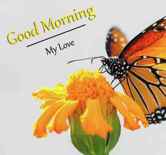 Latest HD Love Good Morning Pics Wallpaper
