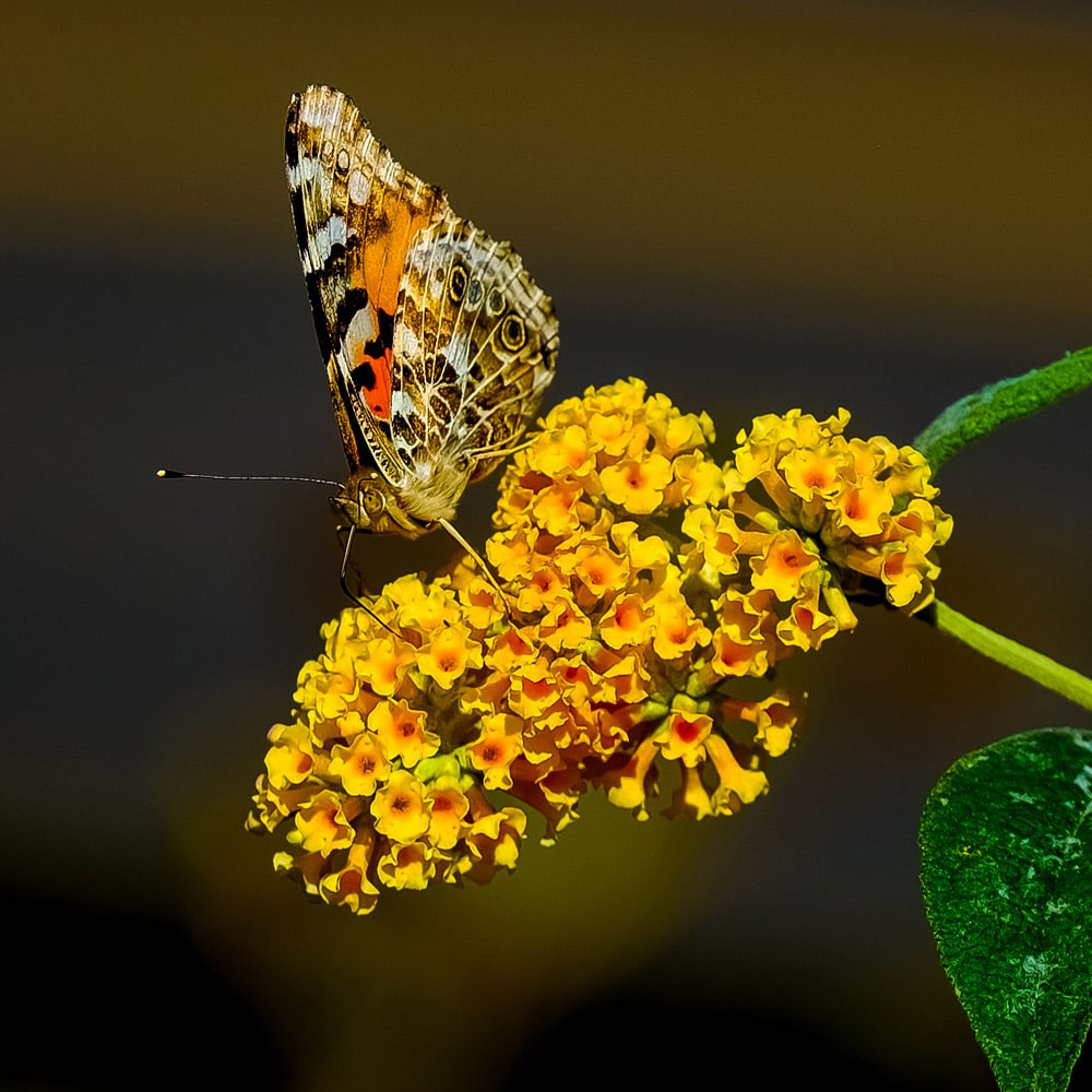 Latest Mast Dp Images photo for butterfly