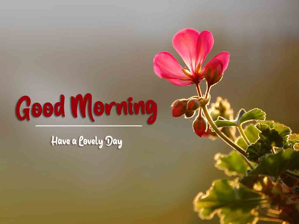 Love Good Morning Images 2