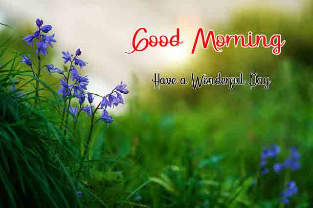 Love Good Morning Images Pics
