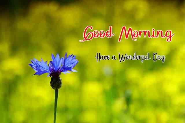 Love Good Morning Pics Download