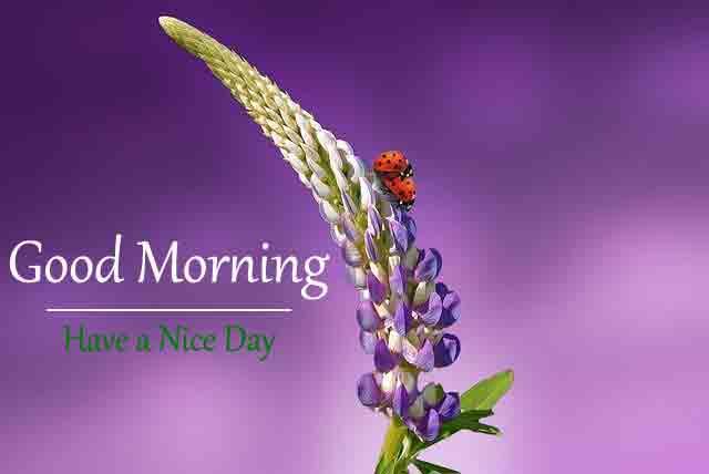 Love Good Morning Pics Free 2