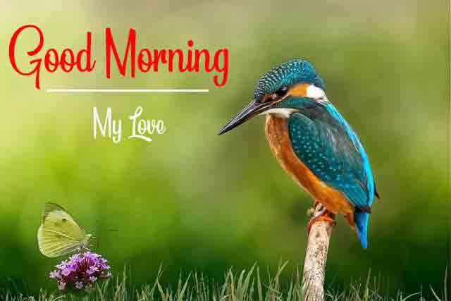 Love Good Morning Pics Wallpaper